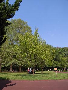 代々木公園(東京都渋谷区):GR DIGITAL、28mm相当、1/810sec、F3.5、ISO64、-0.3EV、プログラムオート