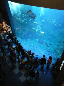 新江ノ島水族館:GR DIGITAL、28mm相当、1/13sec、F2.4開放、ISO400、-0.3EV,プログラムAE