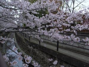二ヶ領用水の桜(川崎市中原区):GR DIGITAL、28mm相当、F3.5、1/290sec、ISO64、プログラムAE、-0.3EV