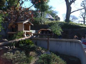 レッサーパンダ(横浜市立野毛山動物園):GR DIGITAL、28mm相当、F3.5、1/310sec、ISO64、-0.3EV