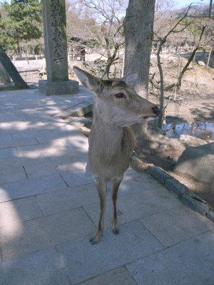 奈良東大寺境内の鹿:GR DIGITAL、28mm相当、F7.1、1/610sec、ISO400、プログラムAE、-0.3EV
