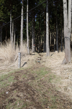 菩提峠(神奈川県秦野市) :Ricoh GR、18.3mm(28mm相当)、F5.6、1/350秒、プログラムAE、ISO-AUTO(ISO 100)、AWB、画像設定:スタンダード