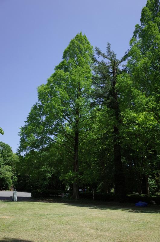 国立科学博物館筑波実験植物園(茨城県つくば市):Ricoh GR、18.3mm(35mm版28mm相当)、F5.6、1/350秒、プログラムAE、ISO-AUTO(ISO 100)、AWB、画像設定:スタンダード、スポットAF