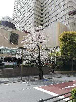 ホテルメトロポリタンの桜(池袋):Huawei P20 lite(ANE-LX2J)、3.81mm(35mm版26mm相当)、F2.2開放、1/566.6秒、ISO50、プログラムAE、AWB