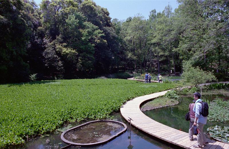 国立科学博物館筑波実験植物園(茨城県つくば市):Nikon F3、Ai Nikkor 28mm F2.8S(AI Nikkor 28mm f/2.8S)、F8AE、L37C、Kodak PORTRA400、Nikon SUPER COOLSCAN 5000ED、ICEありROCなしGEMなし