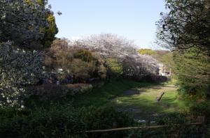 ケルネル田圃(駒場野公園:東京都目黒区):Ricoh GR、18.3mm(35mm版28mm相当)、F5.6、1/200秒、プログラムAE、ISO-AUTO(ISO 100)、AWB、画像設定:スタンダード、スポットAF