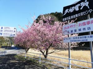カワヅザクラ(久留里城入口):Huawei P20 lite(ANE-LX2J)、3.81mm(35mm版26mm相当)、F2.2開放、1/367.4秒、ISO50、プログラムAE、AWB